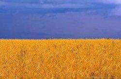 Украина резко сократила расходы на природоохранную деятельность