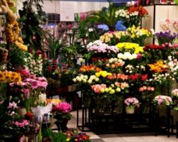 У столиці на третину подорожчали квіти