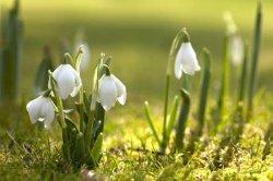 Какая в Украине будет погода весной - прогноз