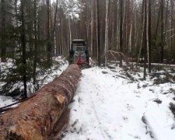 На Сумщині під час заготовки лісу загинув тракторист