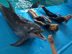 Вера Брежнева показала дельфину, как просить рыбу