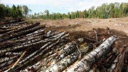 В Киеве на 10 лет запретят рубить деревья