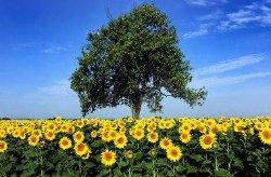Синоптики рассказали, каким в Украине будет лето