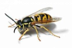 Хмельнитчина: пчелы искусали мужчину до смерти