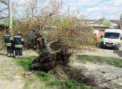 ЧП в Черкассах: на мужчину упало дерево