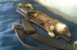 Житель Хмельнитчины хотел пристрелить кошку, а попал жене в голову