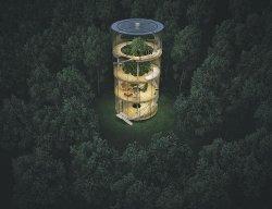 Архитектор разработал невероятный дом с деревом внутри