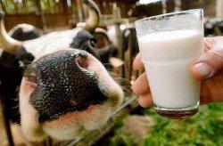 Молдова ввела квоты на мясо-молочную продукцию из Украины