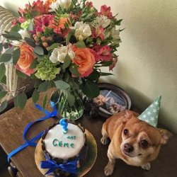 Яна Станишевская преподнесла своей собаке оригинальный подарок