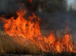 На Днепропетровщине ликвидировала пожар площадью 20 га
