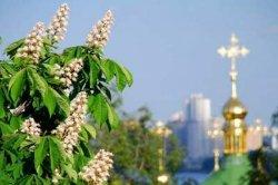 Чем удивят киевлян на День города