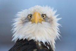 В США птица сбила самолет. Экипаж и пассажиры погибли