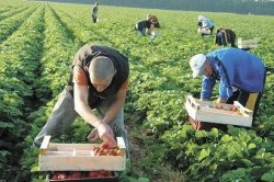 У Польщі побоюються, що їхнє законодавство віднадить українських заробітчан