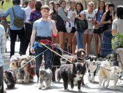 В Киеве будут штрафовать неаккуратных собачников