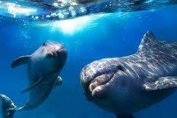 На Винничине украли двух редких дельфинов
