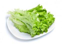 Из Турции в Украину пытались завезти зараженный салат латук