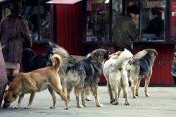 В Николаеве на женщину напала стая бродячих собак