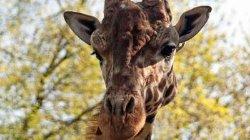 В киевском зоопарке вводят новые правила