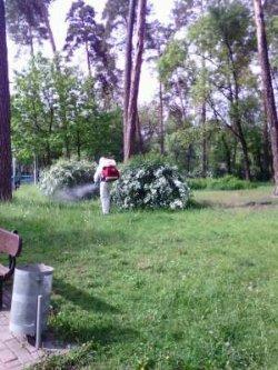 В одном из киевских парков видели людей в скафандрах