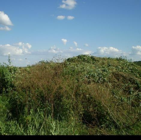 На Луганщине СБУ уничтожила гектар марихуаны на 1,5 млн грн