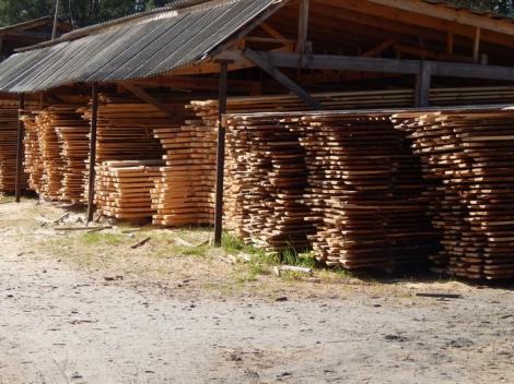 На Житомирщине СБУ разоблачила экспортеров нелегальной древесины в Азию