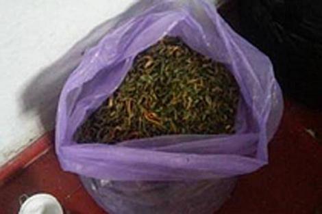 На Днепропетровщине полиция изъяла 200 кг марихуаны стоимостью 2,4 млн грн