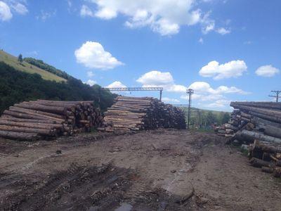 Хищения карпатского леса: у работников лесхозов Львовщины проведены обыски