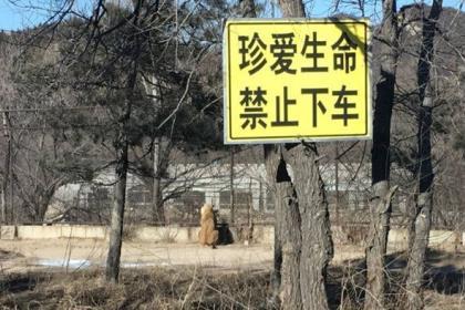 Под Пекином в сафари-парке тигры загрызли туристку и поранили ее родственницу