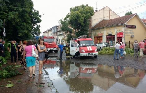 Сильный ливень и ураган повалил в центре Ужгорода деревья и затопил улицы