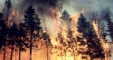 В 12 областях Украины сохранится наивысший уровень пожарной опасности