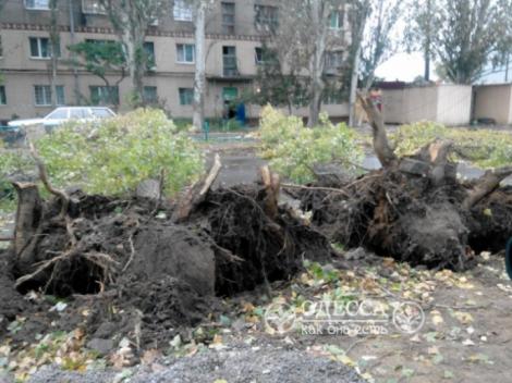 В Одессе во время сильного шторма ветер повалил дерево и убил женщину