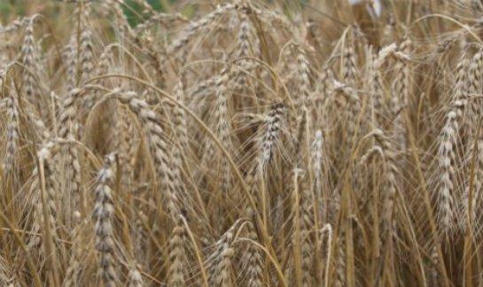 Сельскохозяйственные товары по доступным ценам