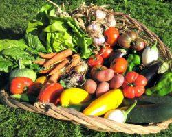 Возможность прямой связи между продавцами и покупателями сельхозпродукции