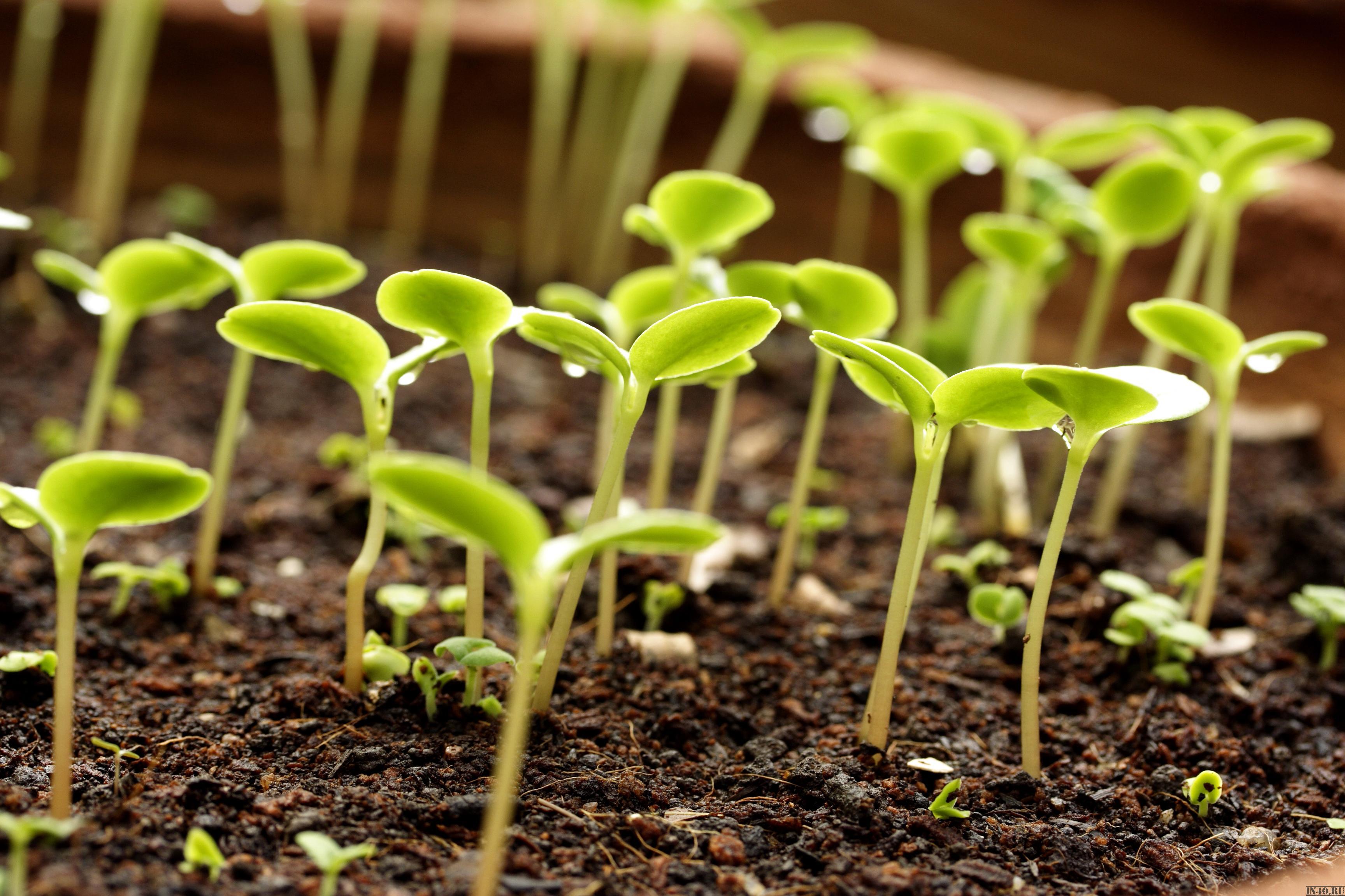 Огромный каталог продукции для людей, выращивающих полезные и красивые растения