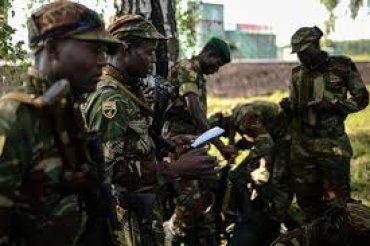 Разведчики из Зимбабве заблудились в лесу под Новосибирском