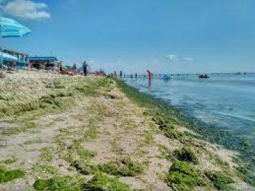 Азовское море пугает отдыхающих