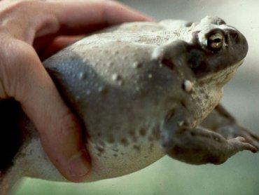 В древних захоронениях Иерусалима археологи нашли консервы из обезглавленных жаб