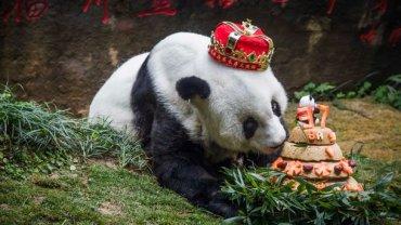 В Китае умерла старейшая панда на планете