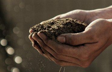 В Молдове изобрели нанопорошок для очищения почвы от пестицидов