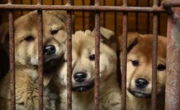 Животная месть: В Корее собаки стали есть людей