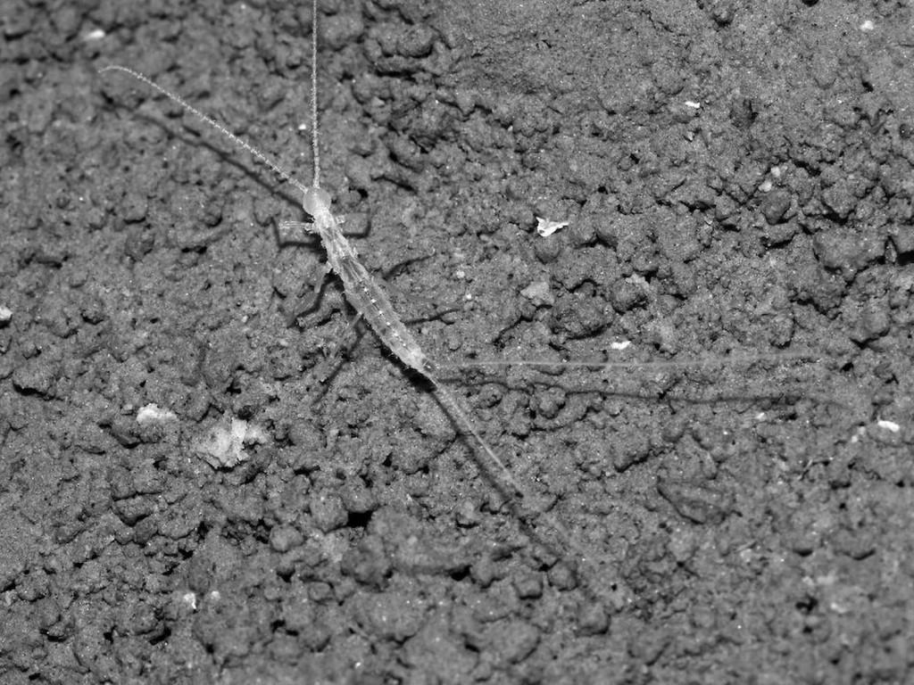 Ученые нашли существо с двумя хвостами