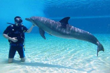 В Крыму гибнут украинские боевые дельфины