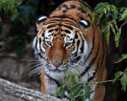 Человечество уничтожило 83% диких животных