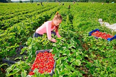 Сколько можно заработать у украинских фермеров