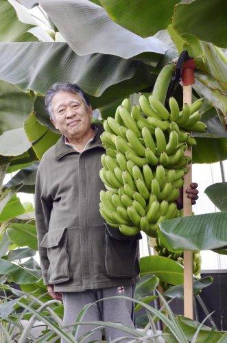 Селекционеры вывели морозоустойчивые бананы