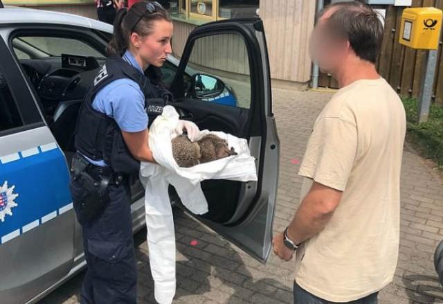 В Германии ежиков спасли от жестокого похмелья