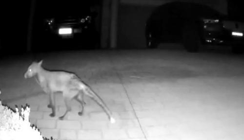 Загадочное существо атаковало людей и попало на камеру наблюдения