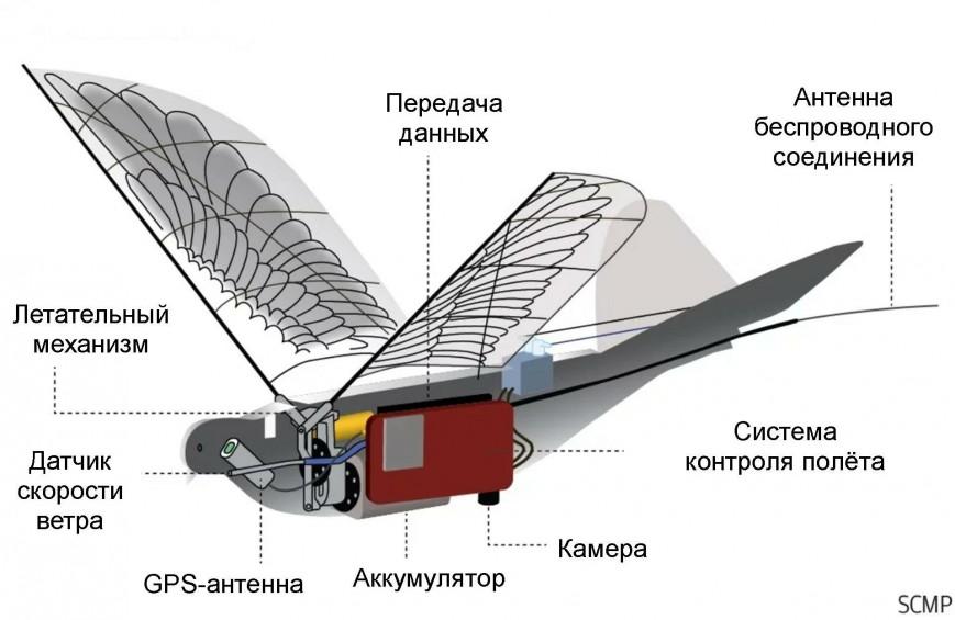 Созданы беспилотники-шпионы в виде голубей