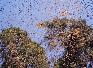 На Киев напали бабочки