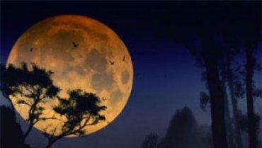 Полет первых космических туристов на Луну отложили